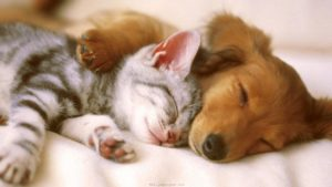 puppy lies on bed with leg holding kitten, both asleep